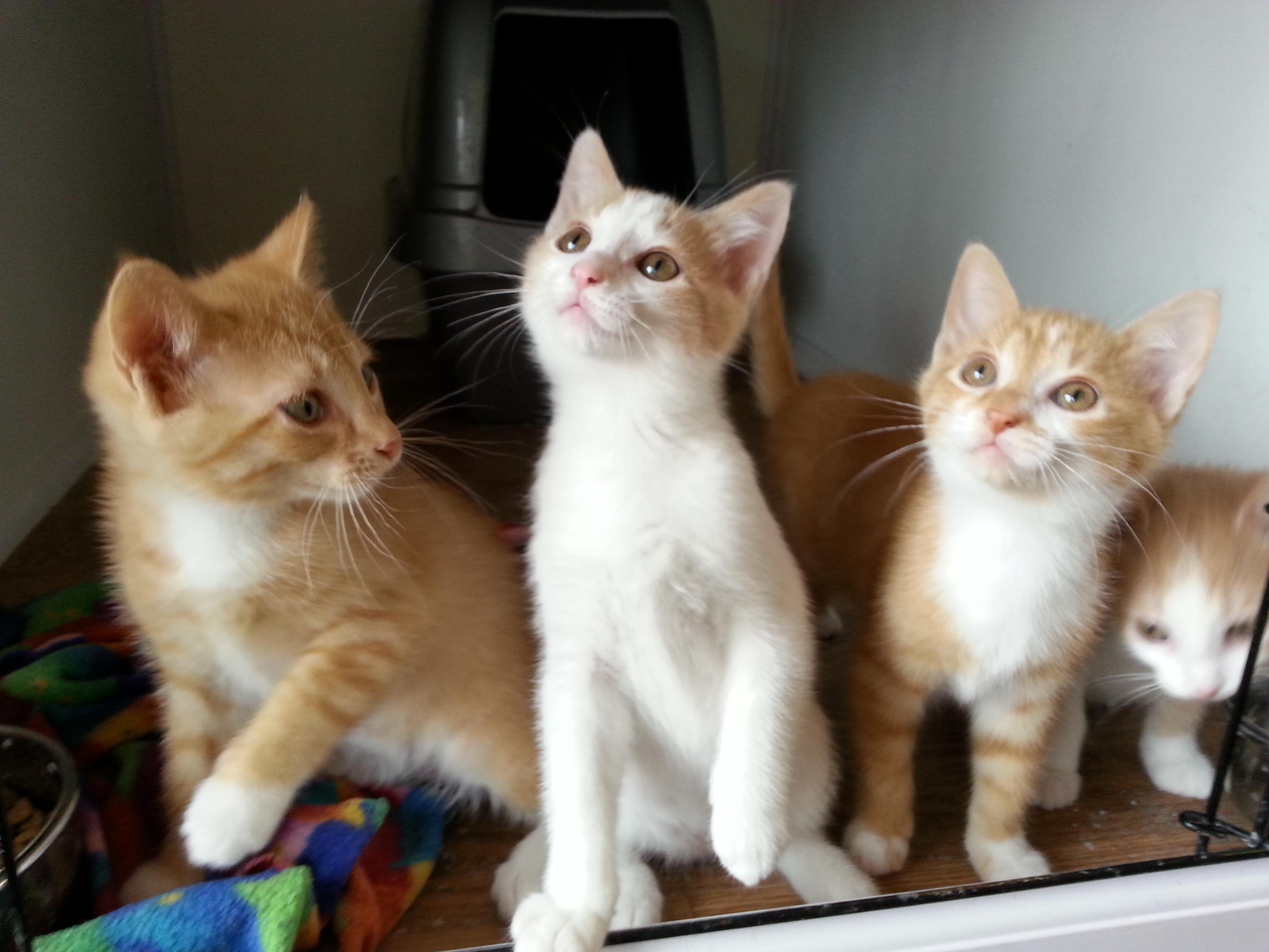 diy outdoor cat houses